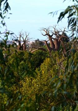 dest-la-selva-africana-en-el-corazon-de-valencia---bioparc.jpg